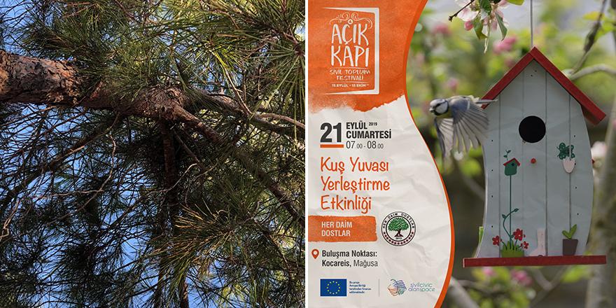 Salamis bölgesine kuş yuvası yerleştirilecek