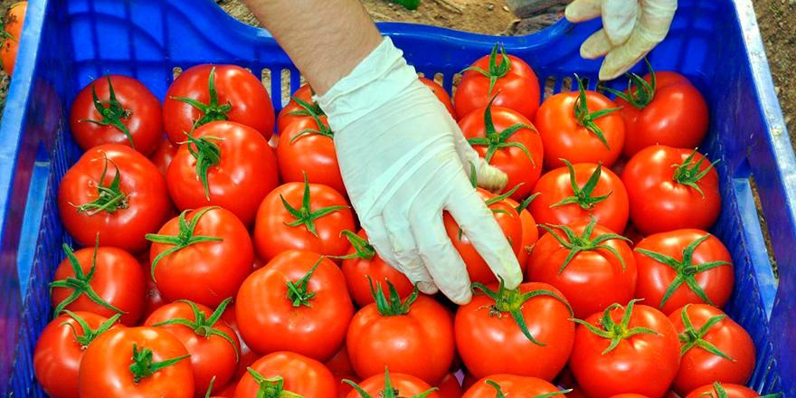 Yerli domateste limit üstü kalıntı
