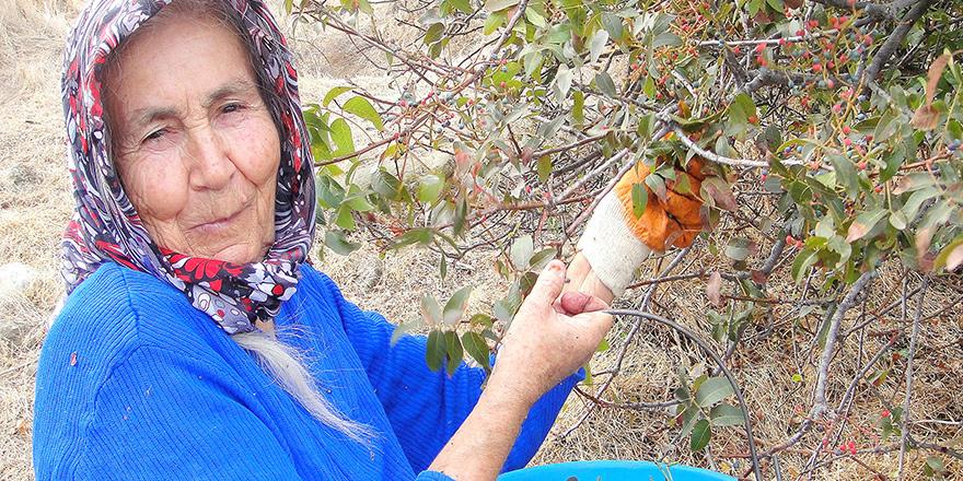 Kıbrıs Ovalarında yetişen yenilebilir doğal otları