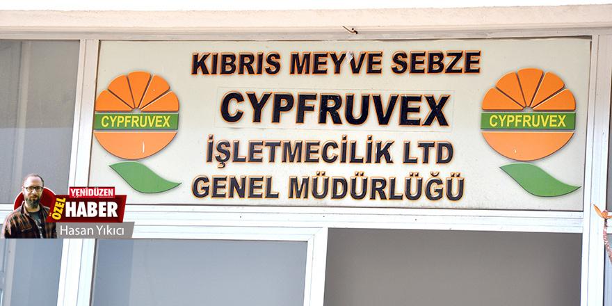 Cypfruvex'de 'genel müdür' gerilimi