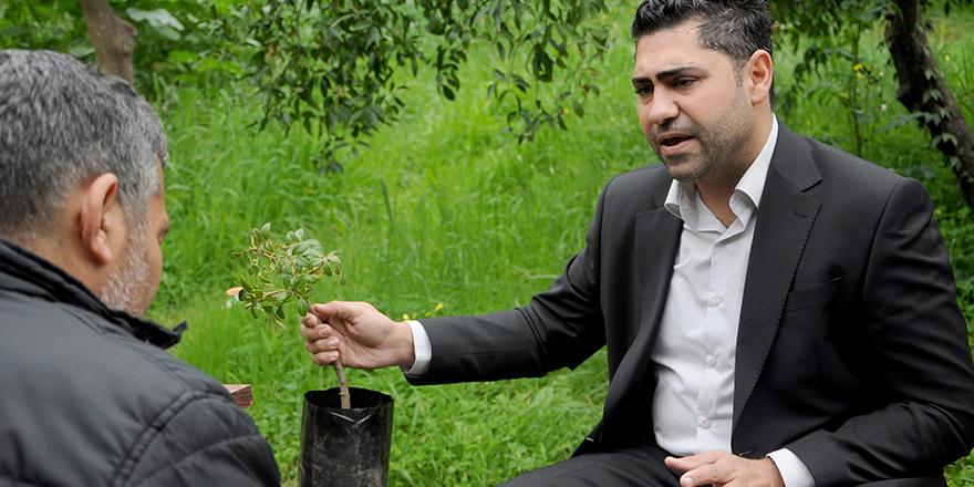 'Sakız ağacı Kıbrıs iklimine uygun'