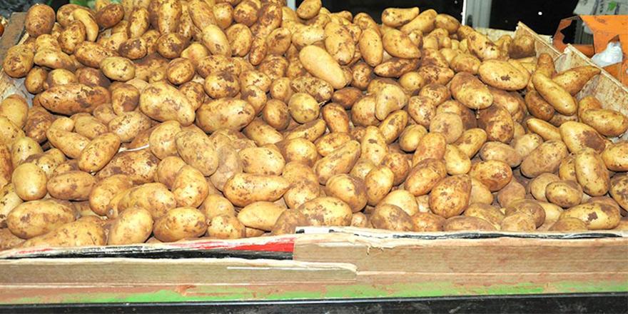 Örnek dayanışa: KTÖS üreticilerden 35 ton patates satın aldı