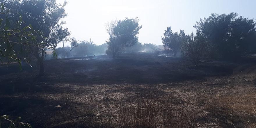 150 adet akasya ağacı yandı