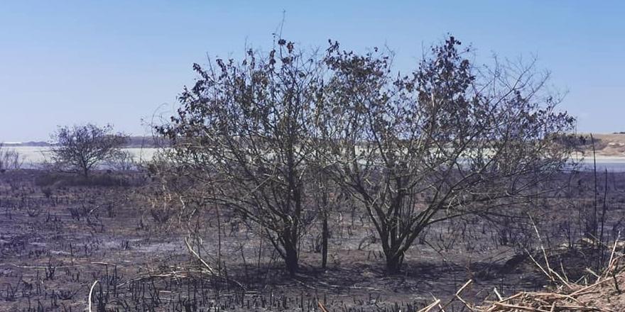 Larnaka'da yangın