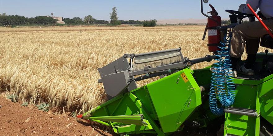 Ülke koşullarına uygun arpa çeşidinin tohumluğu 2022'de çiftçiye arz edilecek