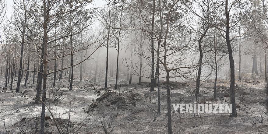 Yangında zarar gören ormanlık alanın kesimine izin verilecek