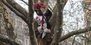 Ağacın tepesinde Mülteci Eylemi