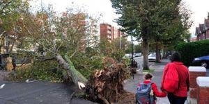 Amsterdamda devrilen ağacın altında kalan kişi öldü