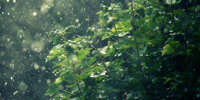 Selvilitepe'ye 69 kg yağış