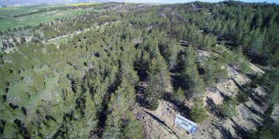 Orman Dairesi önlemlerini arttırdı