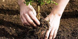 Geleceğin ormanları birlikte yaratılacak