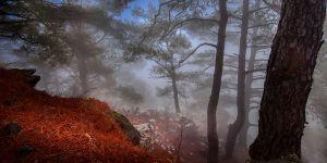 """""""4 Mevsim KKTC Ormanları"""" Fotoğraf Yarışması'na FODER damgası"""