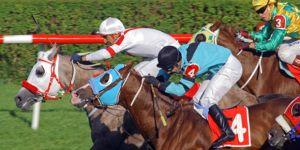 Bir haziran ayı… Bir sınav ayı daha… Ve Yarış Atlarımız… Caretta Carettalarımız…
