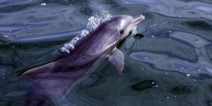 Kıbrıs'ın güneyindeki kara sularında balina ve yunus görüntülendi