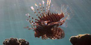 """Kıyılara gelen """"zararlı balık""""lar harekete geçirdi"""