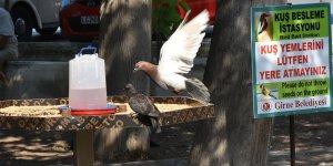 Girne'de, kuş besleme istasyonları yerleştirildi