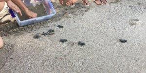 DAÜ, Caretta Caretta yavrularını denizle buluşturdu