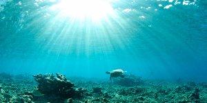 Okyanusta rekor sıcaklık