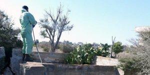 Tarım Bakanlığı: Maraş ve Mağusa'da ilaçlama yapıldı
