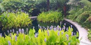 7 bin 253 bitki projesini barındırıyor…