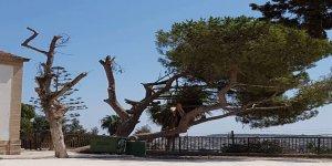 Yeşil Barış Hareketi, ağaç kıyımına dikkat çekti