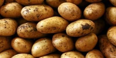 3.5 TL'ye ithal patates!