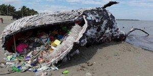 Ölü balinanın karnından 40 kilo plastik çıktı