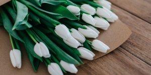 Sevgiliye Doğum Gününde Hangi Çiçek Alınır? (Öneriler)