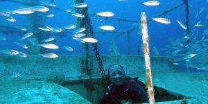 Binlerce balığın yuvası oldu