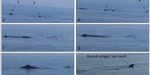 Dr. Snape açıkladı: İspermeçet balinaları