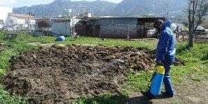 Girne Belediyesi ilaçlamayı artırdı
