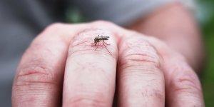 Batı Nil Virüsü için iki toplumlu toplantı
