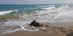Kıbrıs'a aşk için geldi
