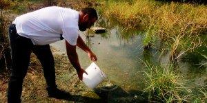 Sivrisinekle doğal mücadele