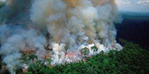 AB'den Amazon Ormanları uyarısı