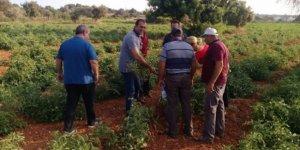Tarım Dairesi, eğitim çalışmalarına Paşaköy'de devam edecek