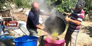 Zeytin hasadı başladı: Rekolte ve talep çok yüksek