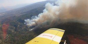 Akamos Ormanı'nda kundaklama şüphesi