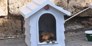 Girne'de sokak hayvanları için çalışmalar sürüyor