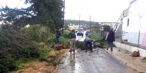 Yenierenköy'de ağaçlar devrildi, evler hasar gördü