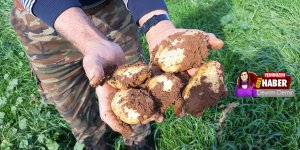 Güneyden kuzeye,  patates talebi