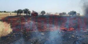 Serdarlı'daki yangınlarla ilgili tutuklama