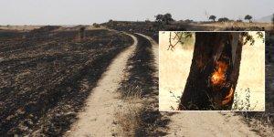 Güneyde gündem: Bir günde 34'ten fazla yangın…
