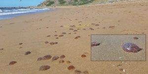 Denizanaları sahile vurdu