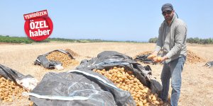 Binlerce kilo patates TARLAYA DÖKÜLDÜ
