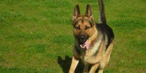 Köpeği vuran kişi tutuklandı