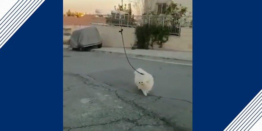 Köpeğini drone ile gezdirdi