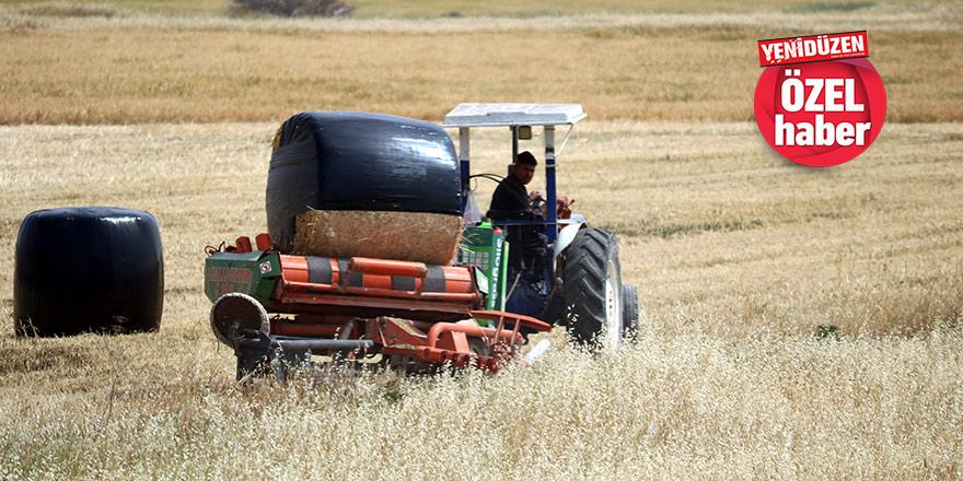 """Mesarya'da çiftçiler dertli:    """"Sezon kurak geçti, ekinler büyümedi…"""""""
