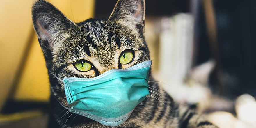 YDÜ: KKTC'de evcil kedi sahibinden COVID-19 kaptı!