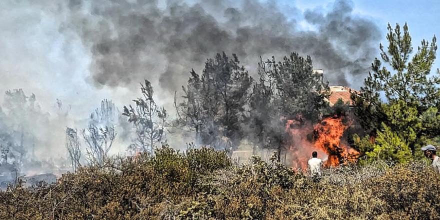 6 dönümlük alan içerisindeki ağaçlar yandı
